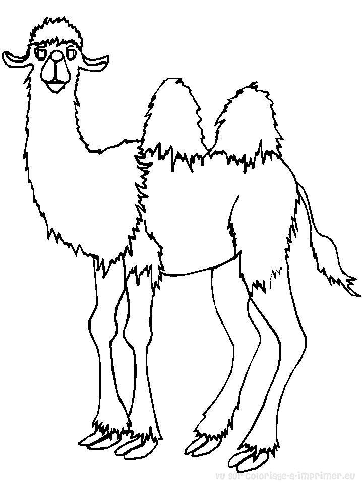 Coloriage imprimer coloriage chameau 007 - Dessin de chameau ...
