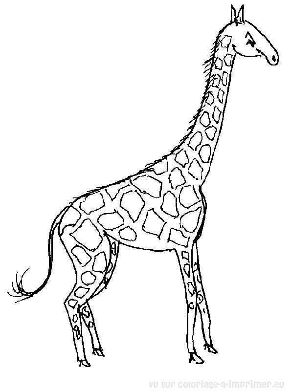 Coloriage imprimer coloriage girafe 001 - Coloriage de girafe ...