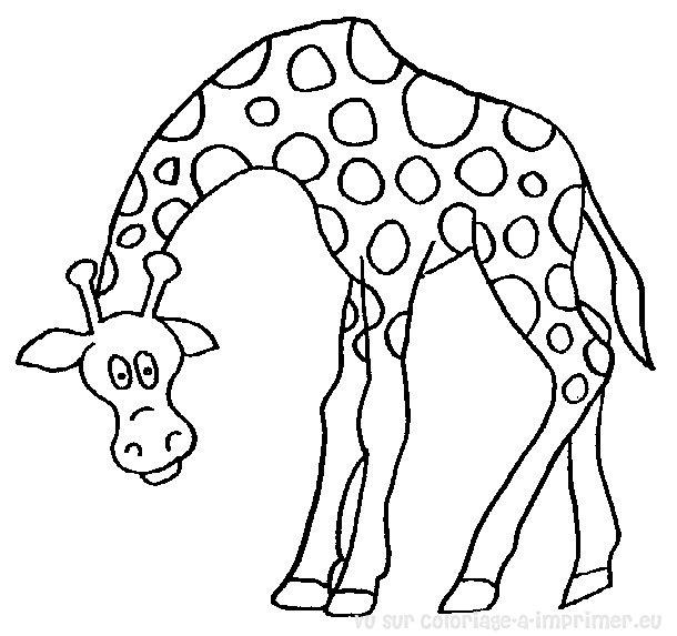 Coloriage A Imprimer Coloriage Girafe 030