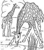 coloriage girafe gratuit, a imprimer
