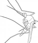 coloriage insectes 004