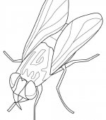 coloriage insectes 007
