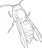 coloriage insectes 009