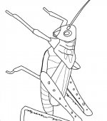 coloriage insectes 010
