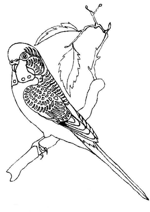 Coloriage Animaux Oiseaux.Index Of Coloriages Animaux Oiseaux