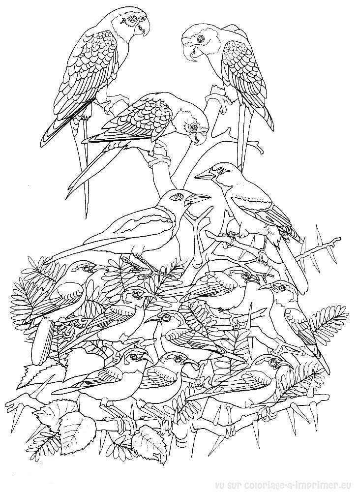 Coloriage a imprimer eu gt oiseaux gt coloriage de coloriage oiseaux 007
