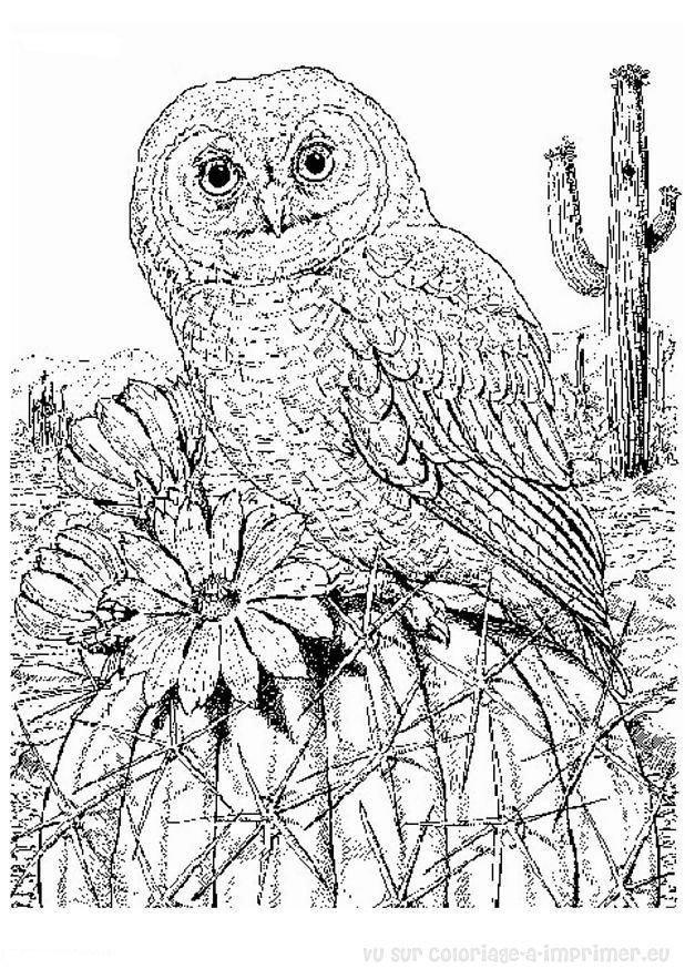 Vous êtes ici : Accueil coloriage-a-imprimer.eu > oiseaux > coloriage ...: www.coloriage-a-imprimer.eu/image.php?url=coloriages/animaux...