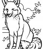 coloriage renards 010