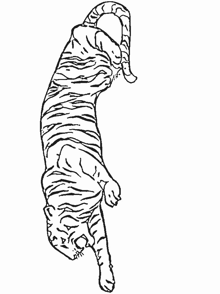 Coloriage Tigre.Index Of Coloriages Animaux Tigre