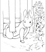 coloriage peter lapin 009