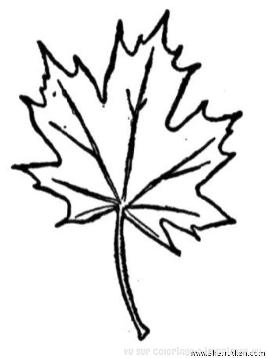 Arbres et feuillages gt coloriage de coloriage arbres et feuillages 008