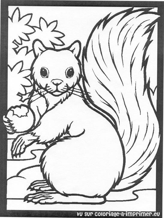 Coloriage Ecureuil A Imprimer.Coloriage A Imprimer Coloriage Ecureuil 008